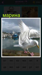 стоит птица альбатрос на фоне воды и корабль около пирса 19 уровень 667 слов