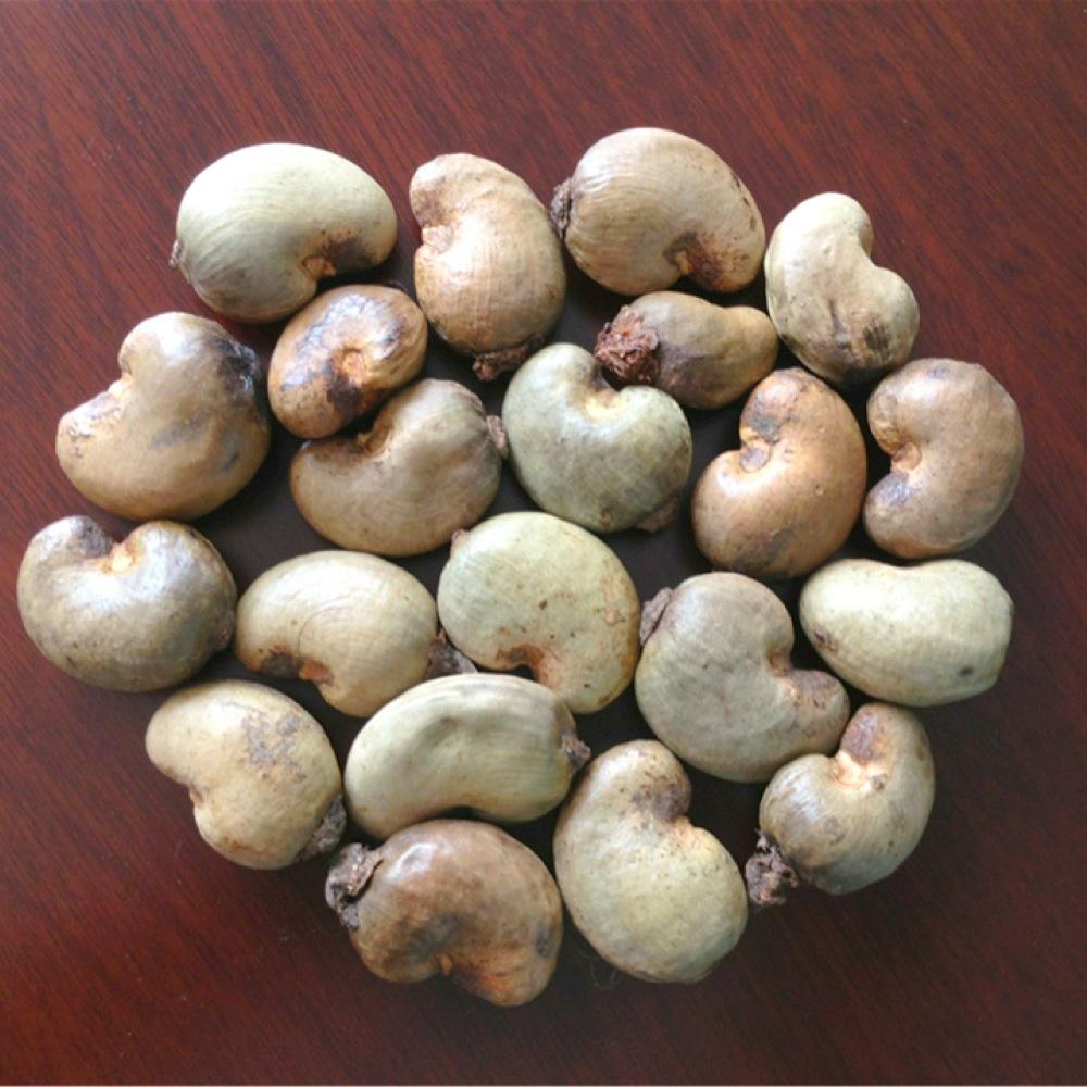 nut importers