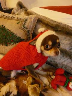 chihuahua de Noël