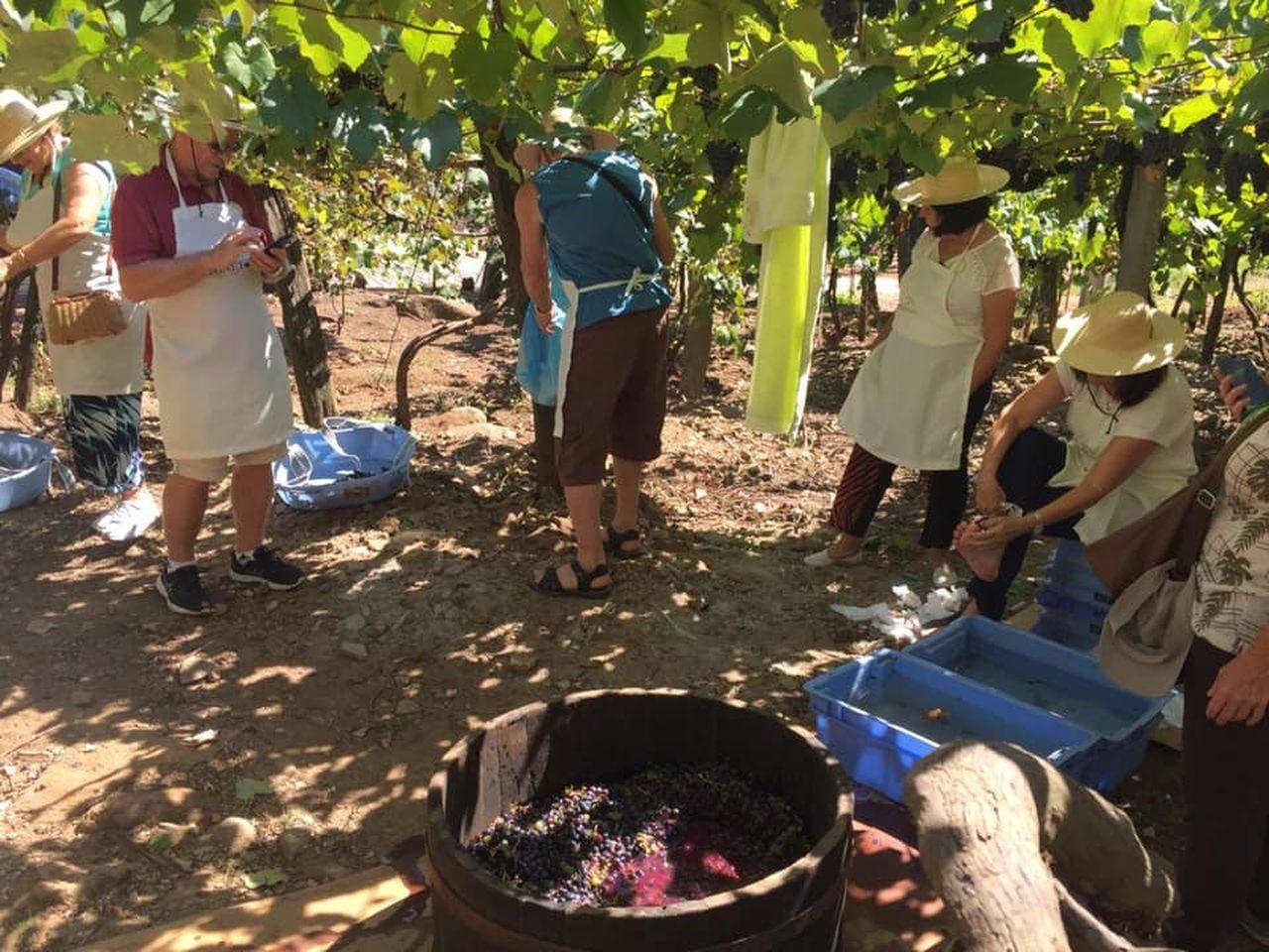 5 vinícolas no Brasil para conhecer e amar
