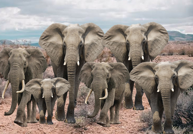hathi aur khargosh ki panchtantra kahani , Elephant and Rabbit Story In Hindi ,  हाथी और खरगोश की कहानी