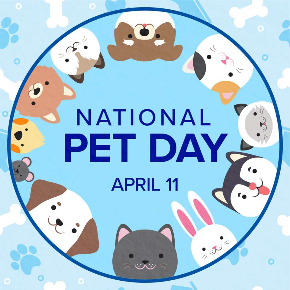 National Pet Day Wishes for Instagram