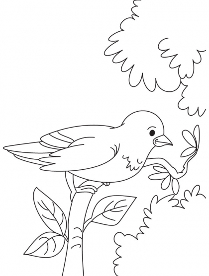 Sparrow coloring pages - photo#46