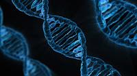 Biologia: Genética Mendeliana | Dicas e Resumos