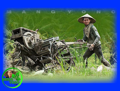 "Cara mengolah tanah yang akan ditanami padi dengan menggunakan ""Robot"" traktor secara modern."