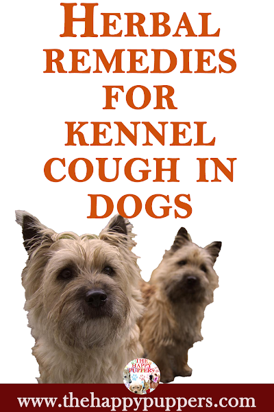 Use herbal remedies to treat kennel cough in dogs