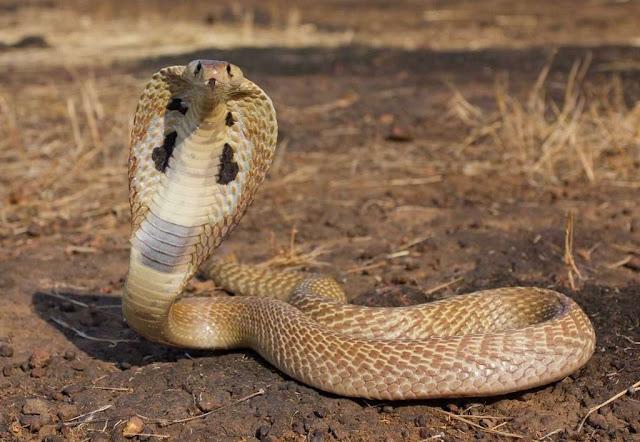 Snake Bites Occurrence around Us