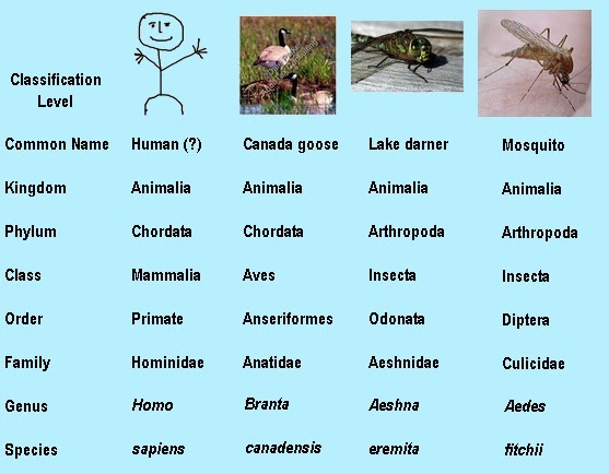 the first letter of every genus name is classification of plants and animals 10090 | classificationFigure