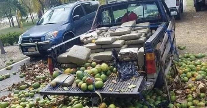 EN BARAHONA: Miembros del ERD ocuparon 115 pacas de un vegetal que se presume es marihuana en la parte trasera de una camioneta que transportaba una carga de mango y guineos