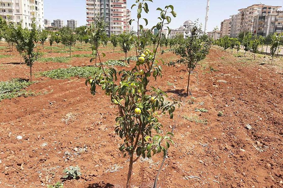 Diyarbakır'da Kent İçi Tarım Projesi meyve vermeye başladı