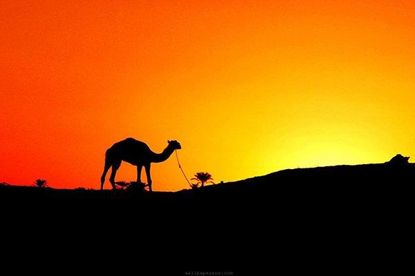 http://1.bp.blogspot.com/-8khvv9Et91Y/VRzYNbeSfxI/AAAAAAAADOU/sK-T06iqbs8/s1600/unta-padang-pasir.jpg