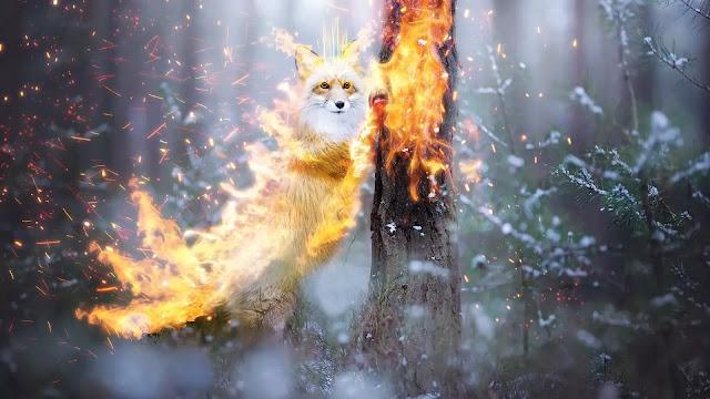 Fire Fox Wallpaper