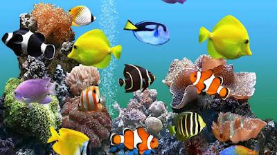 غرائب وعجائب الأسماك
