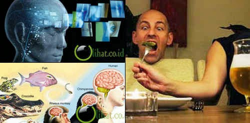 5 Fakta Unik Otak Manusia yang jarang Diketahui Orang