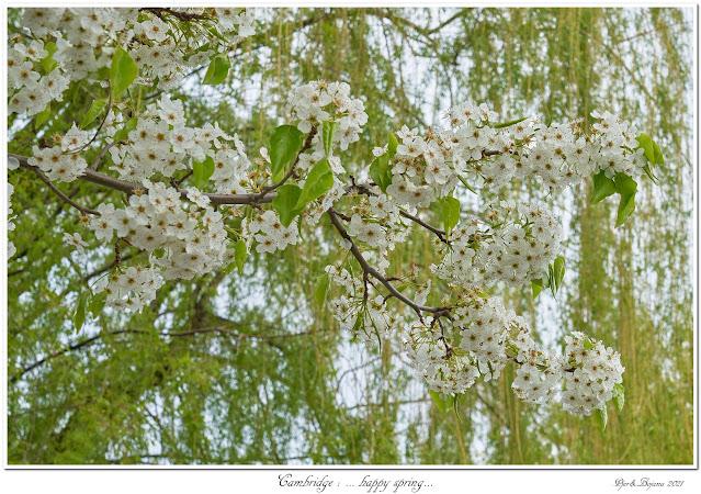Cambridge: ... happy spring...