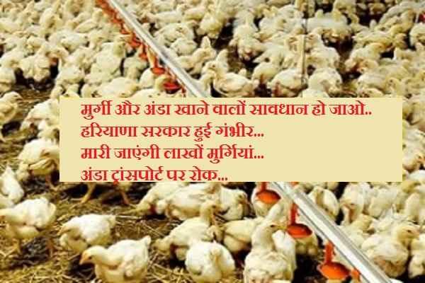 bird-flu-spreading-in-haryana-government-will-kill-poultry-hen
