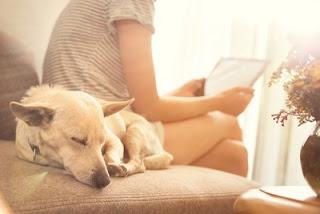 cães e seus donos