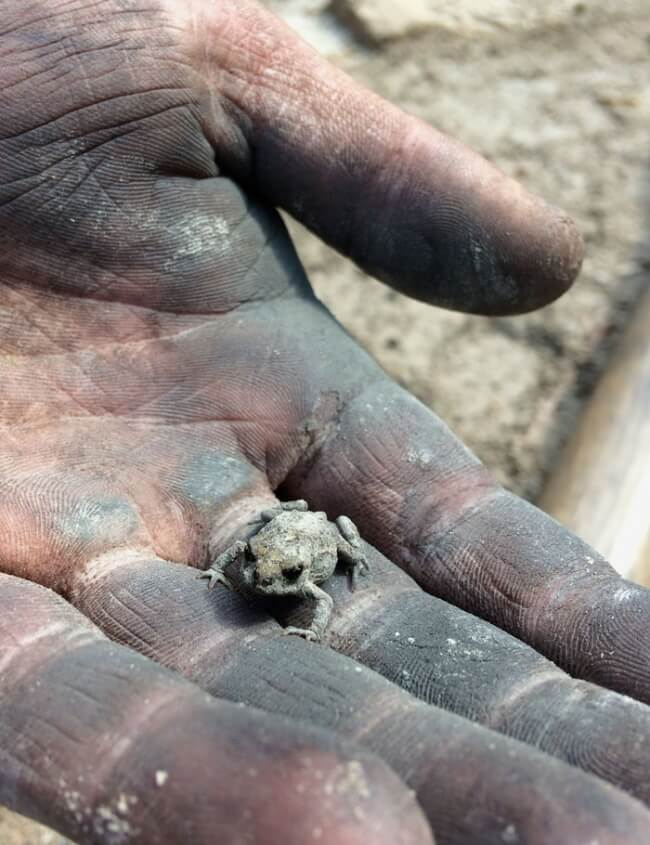 15 Powerful Pictures That Will Make Your Day - A little frog that survived a fire.