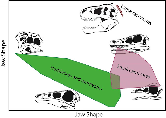 Discriminating diets of meat-eating dinosaurs