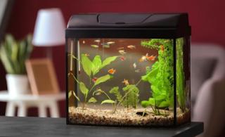 tips memilih aquarium