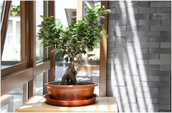 Bonsai próximo a janela