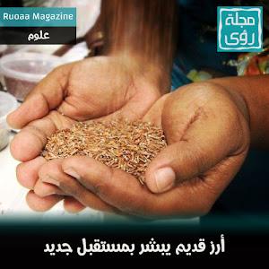 نوع أرز قديم يبشر بمستقبل جديد في إنتاج الأرز