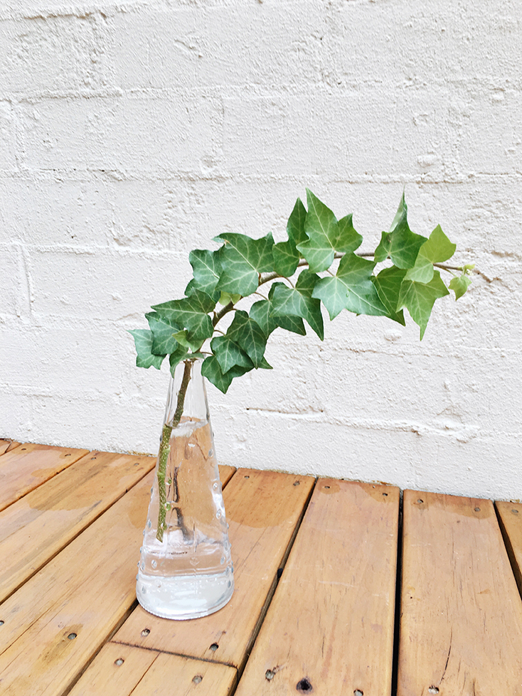 Growing English Ivy From A Cutting Permanent Procrastination