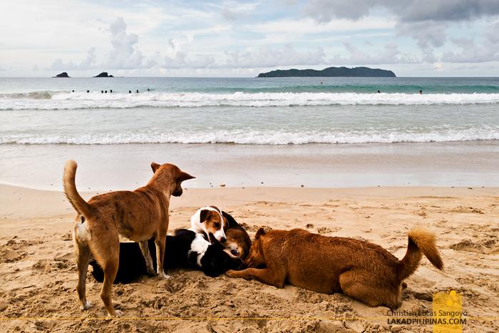 El Nido Nacpan Beach Palawan Dogs