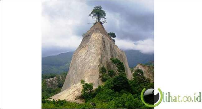 Pohon di atas tebing