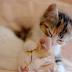 Kedim Ne Zaman Doğuracak