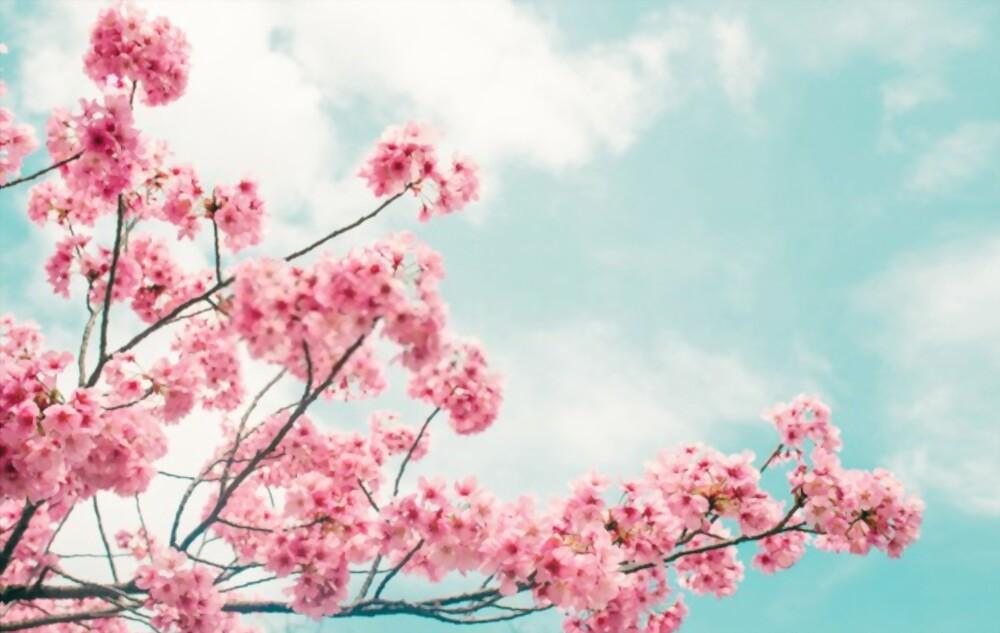 flower in world