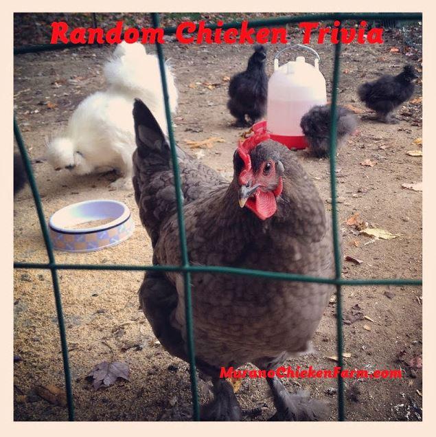 chicken trivia, fun facts