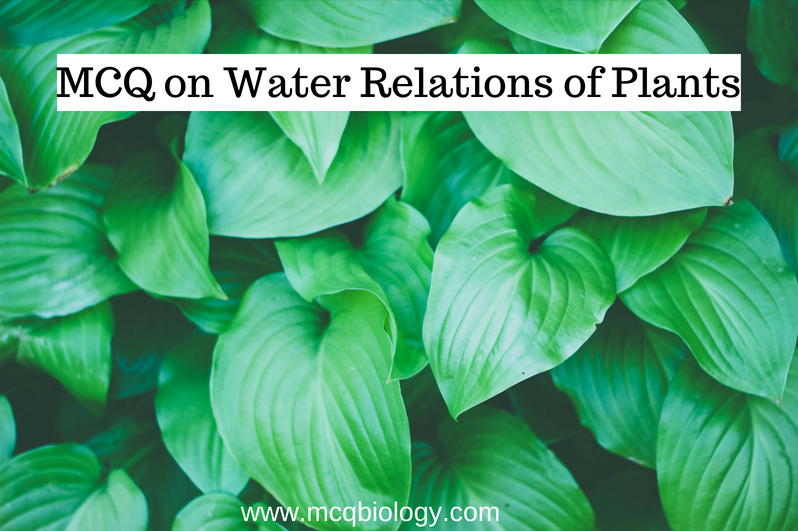 MCQ on Water Relations of Plants
