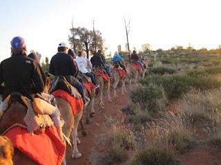 Camel Rides Uluru Australia.
