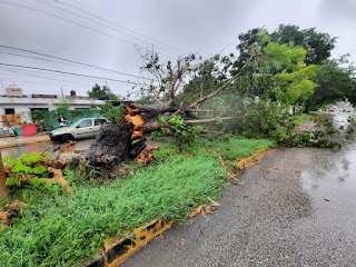 Cancún registra inundaciones y caída de árboles por tormenta Gamma