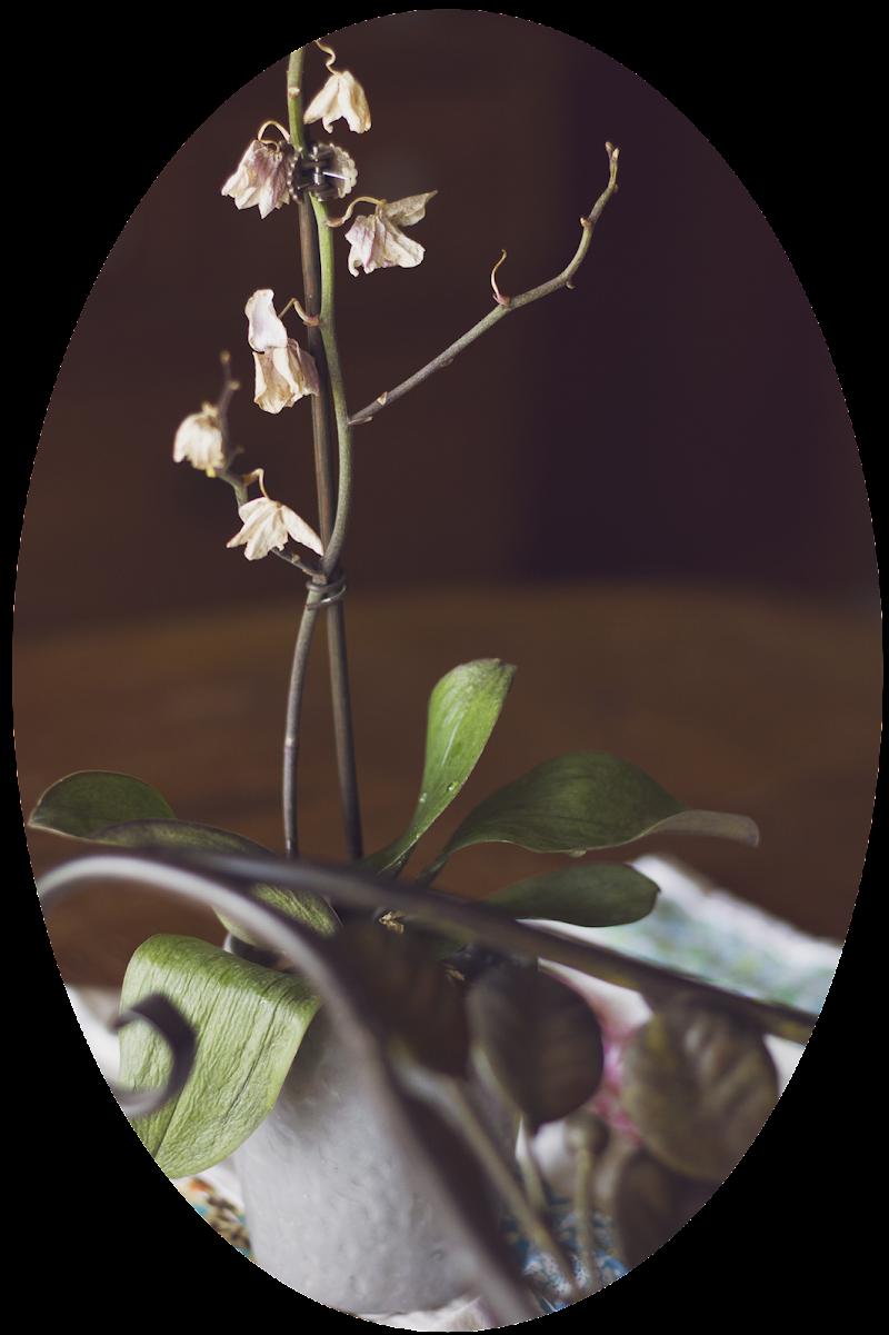 Distressed Plants - $1000 worth