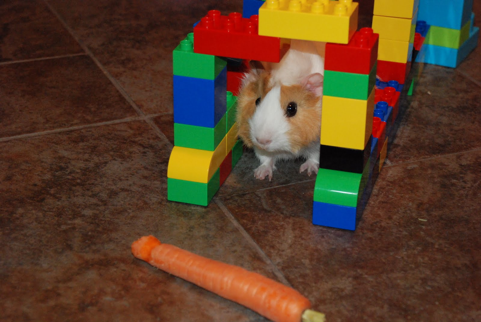 Crazy For Cavies A Lego Maze