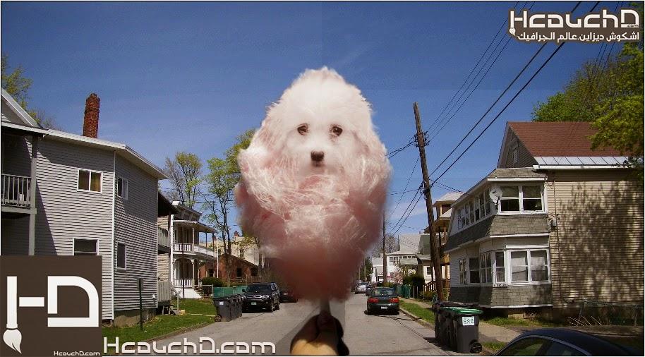 درس 137 : دمج غزل البنات و كلب بإستعمال PhotoShop + ملف PSD