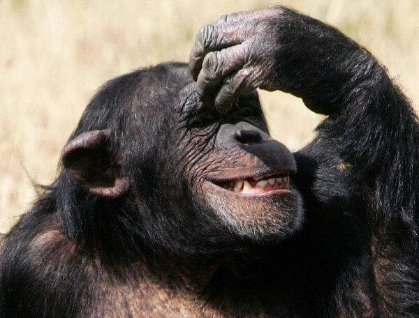 هل الحيوانات تكذب؟
