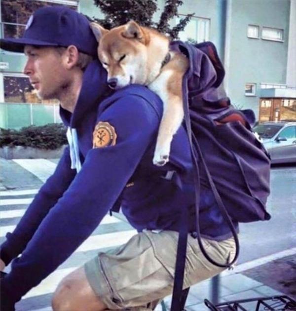 """""""Boss"""" ơi mình đi đâu thế?"""