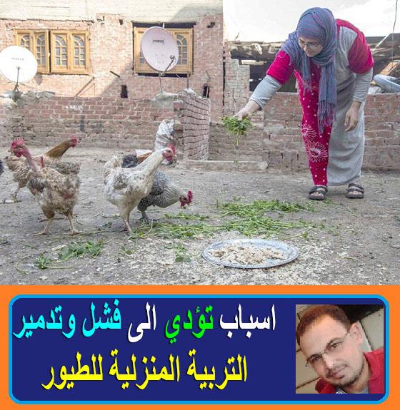 """""""التربية المنزلية للطيور"""" """"تربية الطيور المنزلية"""" """"التربية المنزلية للدواجن"""" """"تربية العصافير المنزلية"""" """"اساليب تربية الطيور المنزلية"""" """"كيفية تربية الطيور المنزلية"""" """"طرق تربية الطيور المنزلية"""" """"طريقة تربية الطيور المنزلية"""" """"طيور التربية المنزلية"""" """"طيور تربية منزلية"""" """"معلومات عن تربية الطيور المنزلية"""" """"تربية الطيور في البيت"""" """"تربية الطيور بالمنزل"""" """"تربيه الطيور البلدي"""" """"تربية الطيور في المنزل"""" """"تربيه الدواجن في المنزل"""" """"تربية الدواجن في المنزل pdf"""" """"تربية الدواجن المنزلية"""" """"تربية العصافير للمبتدئين"""" """"تربية العصافير البلدي"""" """"تربية العصافير في البيت"""""""