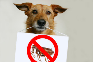 Natural Flea Control For Dogs