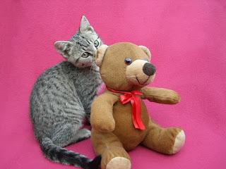 Amigo de peluche y gato lindo