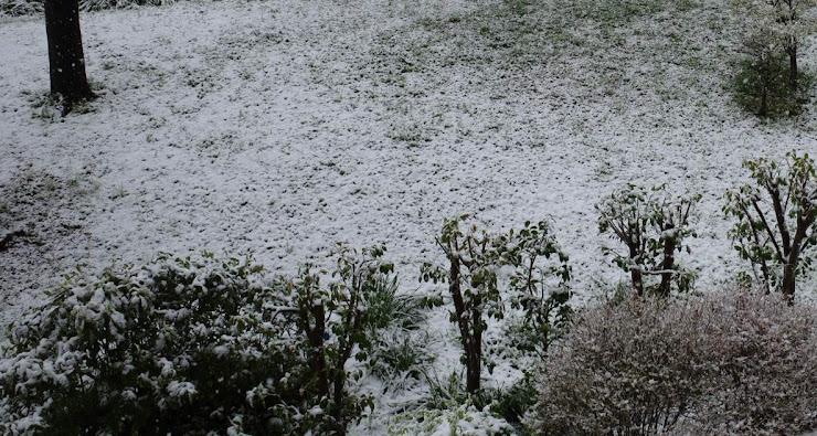 季節外れの雪に覆われた芝生