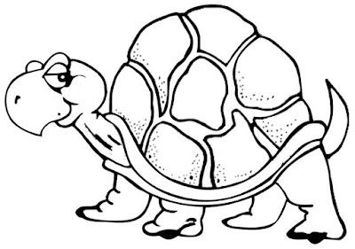 gambar sketsa kura-kura tua