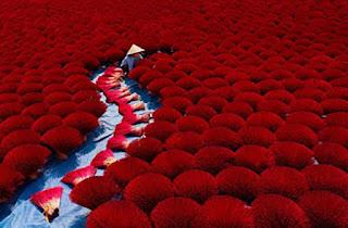 اشيك صور زهور حمراء من اليابان