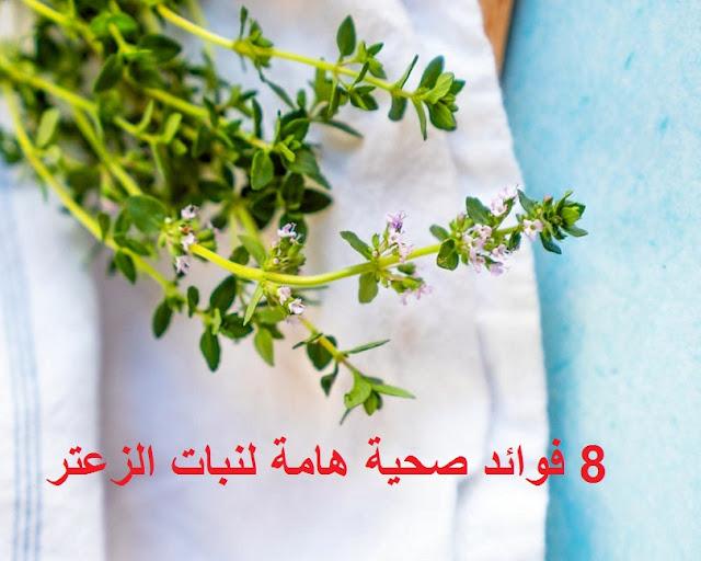 فوائد نبات الزعتر thyme