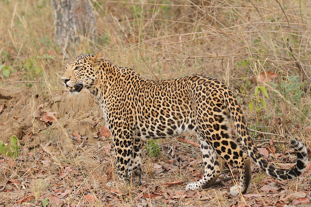 Satpura National Park and Biosphere