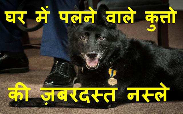 ghar me palne wala dog, achi nasal ke dog, achi nasal ke kutte,dogs breeds in india, sabse achi nasal ke kutte