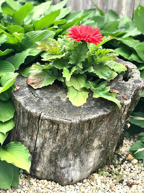 Make a Beautiful DIY Garden Planter from an Old Stump